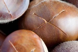 chesnuts-091011-0002