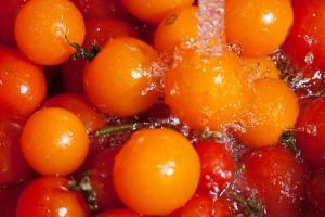 tomato-091002-0002