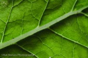 turnip greens-091017-0001